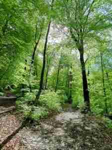 un bosco che rappresenta la scoperta di sè